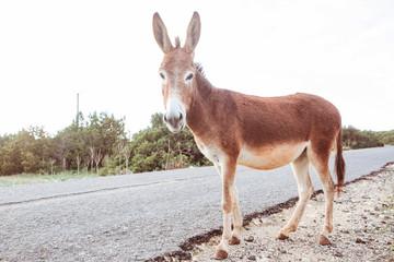 Wid donkey
