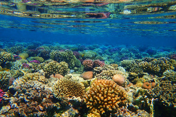 Fotobehang Koraalriffen coral reef in Red Sea