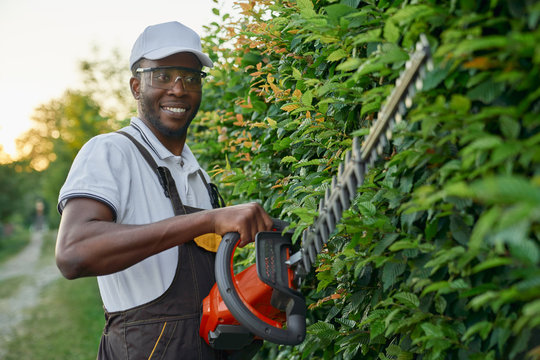 Smiling afro gardener using hedge trimmer for cutting bushes