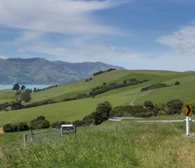 Printed roller blinds Natuur Akaroa New Zealand