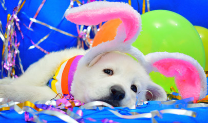 funny easter bunny puppy
