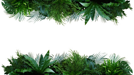 Photo sur Aluminium Route dans la forêt Green leaves nature frame layout of tropical plants bush (Monstera, palm, fern, rubber plant, pine, birds nest fern) foliage floral arrangement on white background with clipping path.