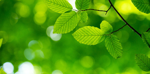 green leaves background in sunny day Wall mural