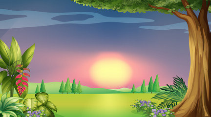 Wall Mural - Background scene with sunset in the park