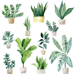 Set of watercolor illustrations of home tropical plants in clay pots. Jungle, palm leaves, fern and others. Hand drawn watercolor set of anthurium green leaves and home plant isolated