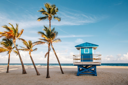Beautiful tropical Florida landscape with palm trees and a blue lifeguard house. Typical American beach ocean scenic view with lifeguard tower and exotic plants. Summer seasonal wallpaper background.