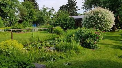 Fototapeta Green garden Pond in Summer