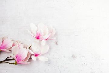 Magnolia flowers flat lay scene