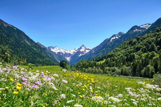 Alpen, Blumenwiese in den Bergen mit Schnee auf Gipfel