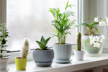 Tuinposter Planten Potted plants on window. Houseplants in pots on windowsill. Home decor concept.
