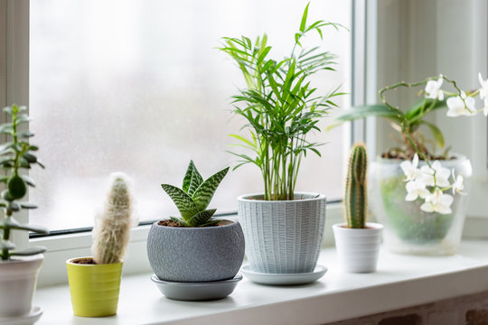 Potted plants on window. Houseplants in pots on windowsill. Home decor concept.
