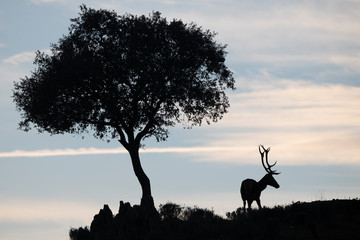 Silhouette of a deer stag and a tree