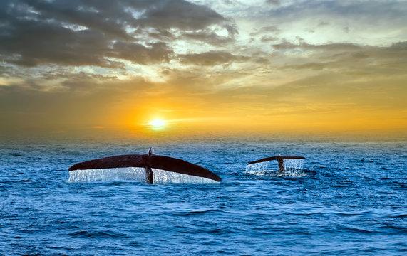 Tale Blue Whale Watching in Sri Lanka marine life indian ocean Mirissa
