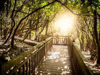 Beautiful image of wooden pathway for hiking in old forest against bright sunrise sun