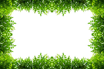green leafs frame card on white background. Wall mural