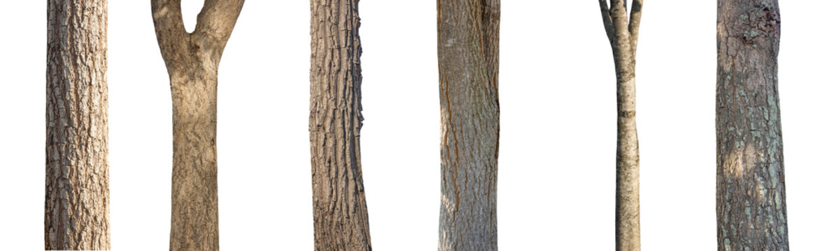isolated set tree trunk Collection on White background.