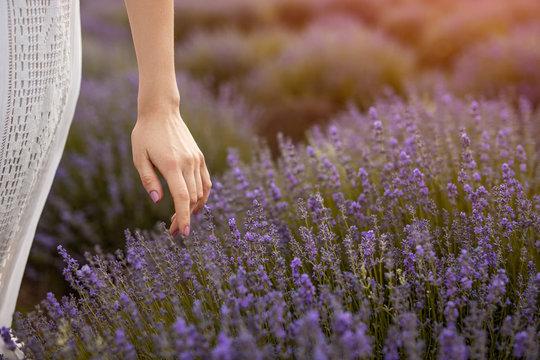 Crop female touching lavender flowers in field
