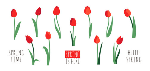 Vector set of red tulip flowers isolated on white background. Early spring garden flowers. Clip art for bright festive greeting card, poster, banner. Handwritten lettering.