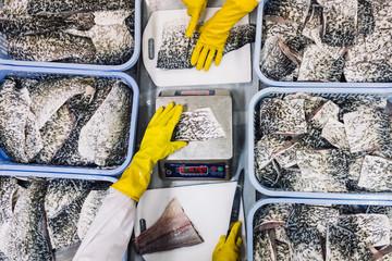 High angle close up of portions of Barramundi ready for packaging. ,Nha Trang