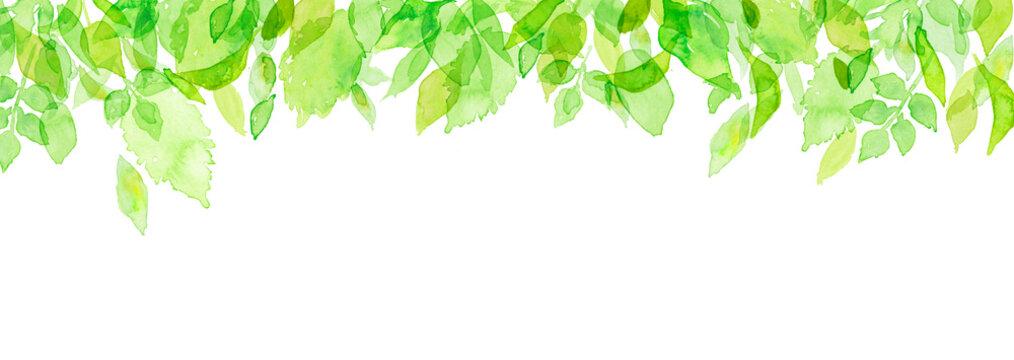 水彩 新緑