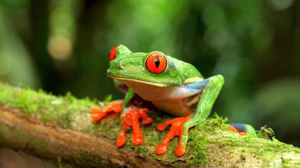 Tuinposter Kikker tropical green frog