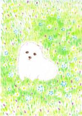 お花畑と白い犬
