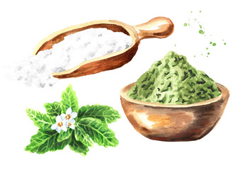 Stevia rebaudiana plant, Natural sweetener, and  dry shredded stevia with powder set. Hand drawn watercolor illustration,  isolated on white background