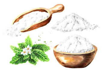 Stevia rebaudiana plant, Natural sweetener, with powder set. Hand drawn watercolor illustration  isolated on white background