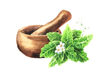 Stevia rebaudiana sprig with flowers fresh leaves and mortar. Natural sweetener.. Hand drawn watercolor illustration  isolated on white background