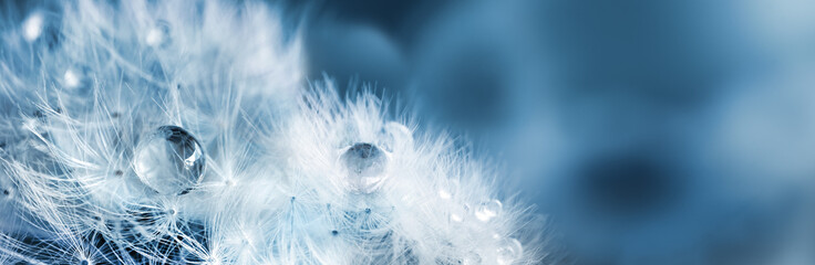 Tuinposter Paardenbloem Fluffy dandelions with dew drops, natural blue blurred spring background, close-up. Copy space. Soft focus abstract background.