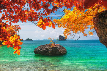 Beautiful nature scenic landscape beach in colorful autumn trees Andaman sea Krabi, Attraction place tourist travel in your dream Phuket Thailand summer holiday vacation, Tourism destination Asia trip Fotobehang