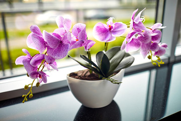Tuinposter Orchidee pink orchid in the pot