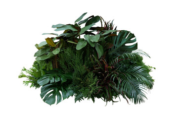Wall Mural - Tropical foliage plant bush (Monstera, palm leaves, Calathea, Cordyline or Hawaiian Ti plant, ferns, and fir) floral arrangment nature backdrop isolated on white with clipping path.