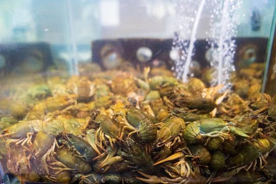 live crayfish in the store in the aquarium