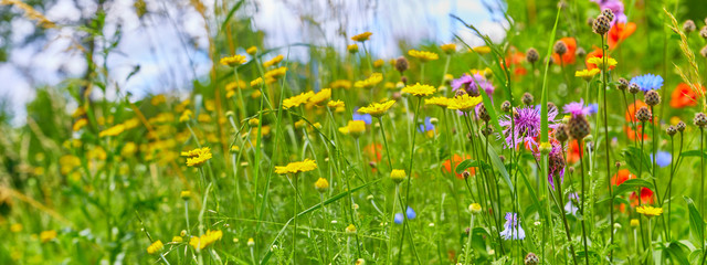 Beautiful flower meadow on the side of the path