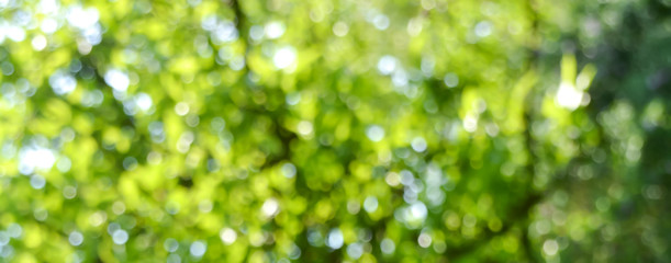 Spring background - abstract banner - green blurred bokeh lights