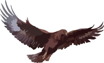 Sketch, an eagle flies spread its wings. Suitable for emblem, symbol, logo, advertisement, label, picture on t-shir