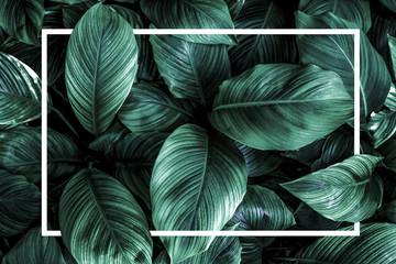 Garden Poster Lotus flower green leaf background