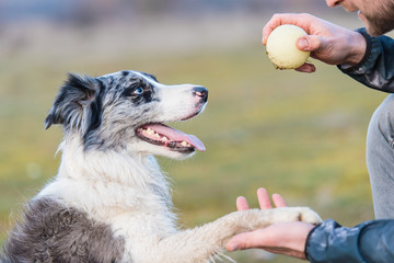 Dog training with a ball in the park