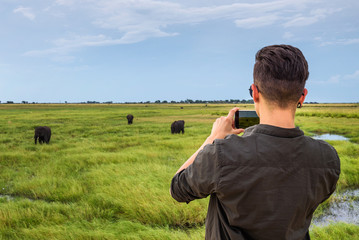 Tourist films elephants with a smartphone in Chobe National Park, Botswana