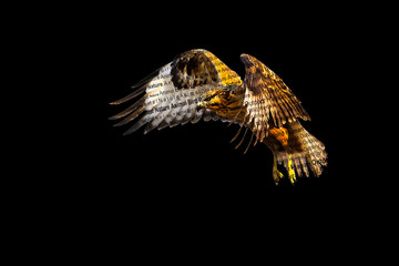 Wildlife nature photo. Black background. Fototapete