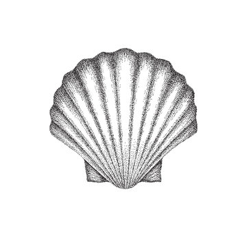 Scallop shell hand drawing in dotwork style. Vector illustration