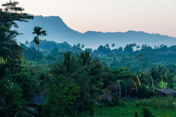 rural landscape at dawn with trees in bali
