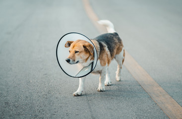 Dog wearing collar neck in the shape of a cone, elizabethan collar (also known as a buster collar) Fotobehang