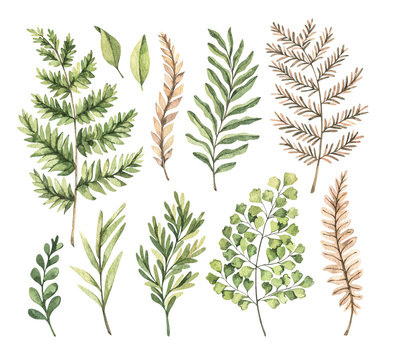 Botanical watercolor clipart. Set of Green leaves, fern, herbs and branches. Watercolor illustrations. Floral Design elements. Perfect for wedding invitations, greeting cards, blogs, posters, logo
