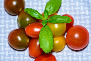 Cherry Tomatoes and Sprig of Basil