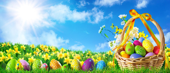 Fotobehang Narcis Basket of easter eggs on green grass at sunny day