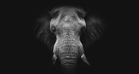 Photo sur Toile Elephant Elephant on black, fine art B&W