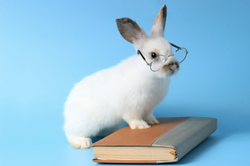 White rabbit wearing glasses with a book on a blue background, cute bunny studying and reading a book, pet education and animal training concept