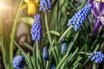 Photo sur Plexiglas Narcisse garden of of blooming various flowers in springtime